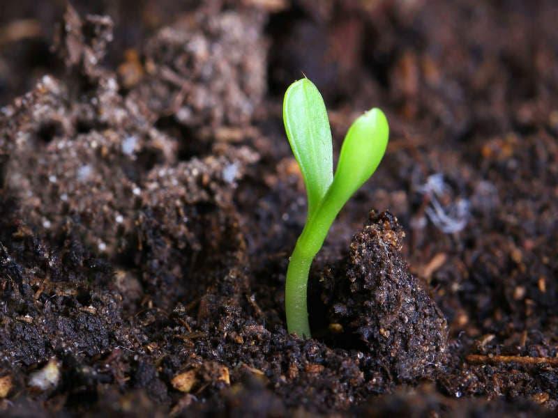 El suelo es uno de los recursos naturales m s valiosos y for Recurso clausula suelo