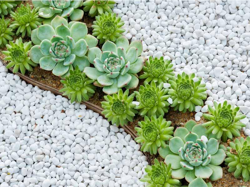 C mo cuidar plantas suculentas - Plantas para jardin zen ...